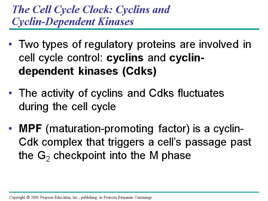 The Cell Cycle Clock: Cyclins and Cyclin-Dependent Kinases Two types of regulatory proteins are