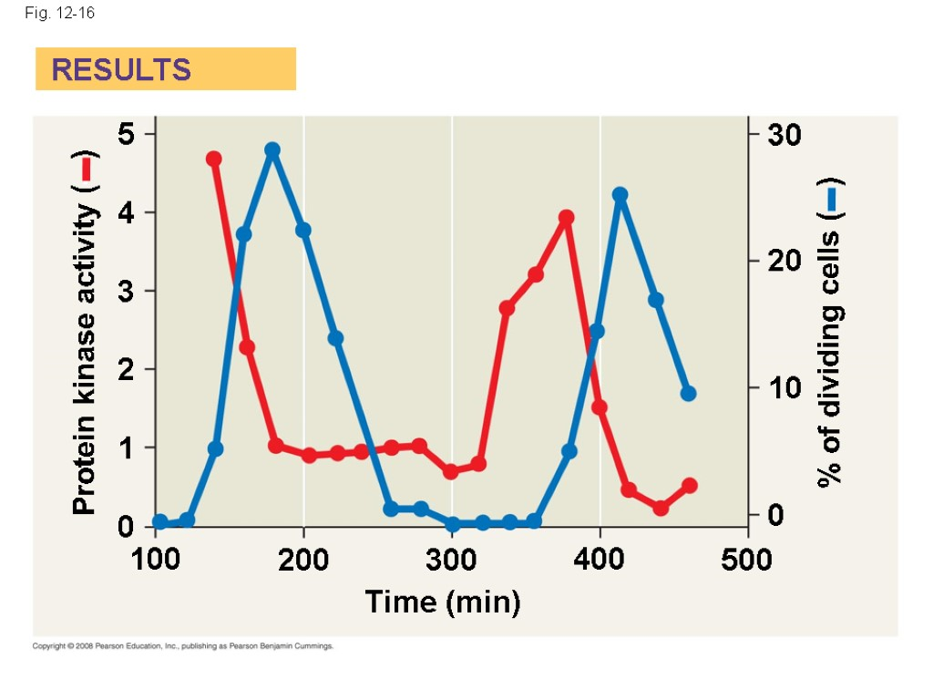 Fig. 12-16 Protein kinase activity (– ) % of dividing cells (– ) Time