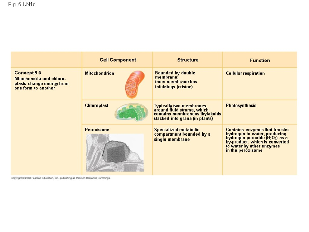 an overview of the cellular structure and function Cell structure location description function cell wall plant site of aerobic cellular respiration continue reading cell functions.