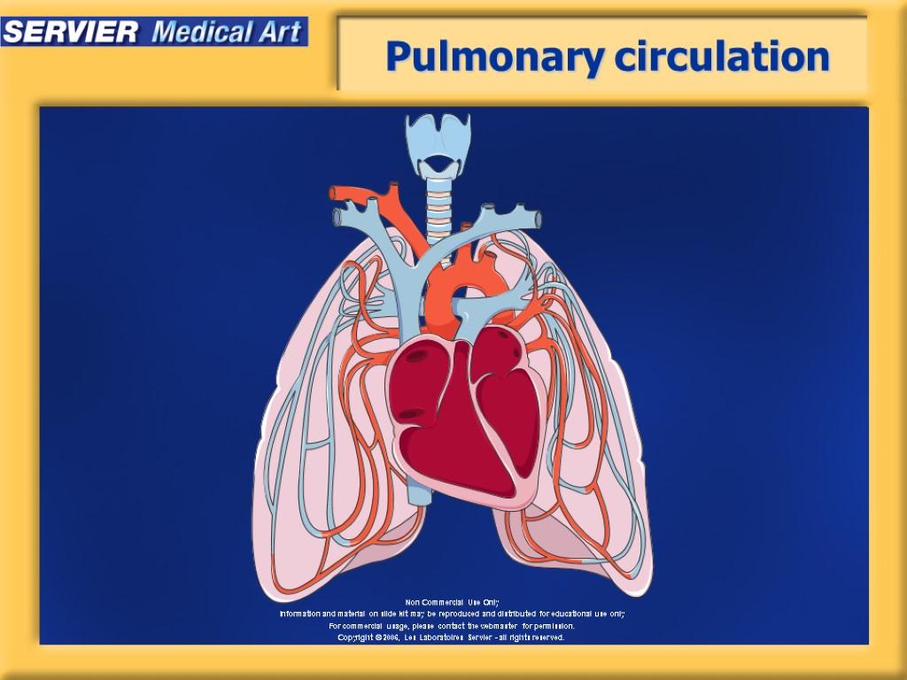 review sheet 32 pulmonary circulation