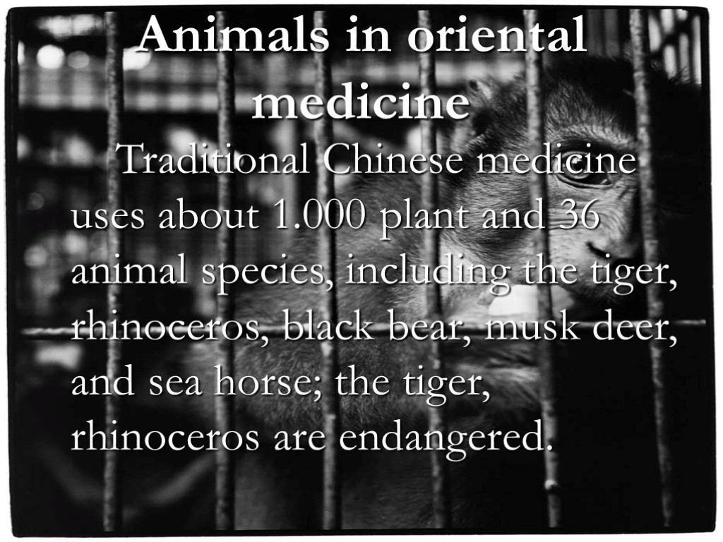 Animals in oriental medicine Traditional Chinese medicine uses about 1.000 plant and 36 animal