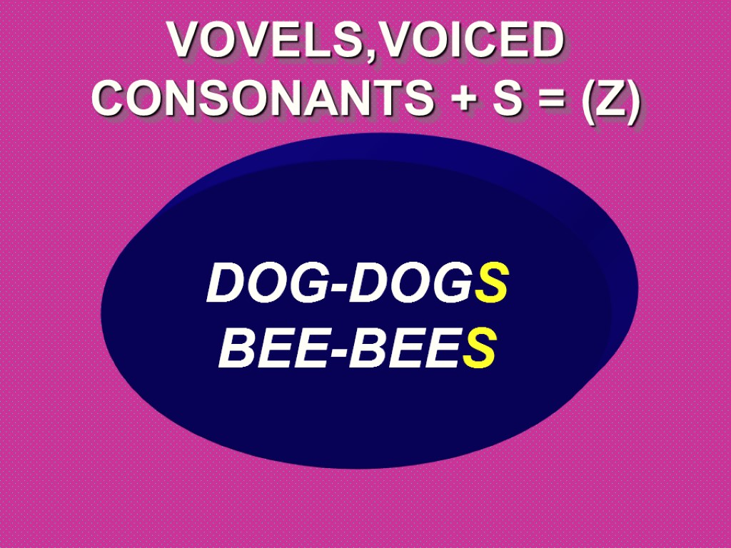 >VOVELS,VOICED CONSONANTS + S = (Z) DOG-DOGS BEE-BEES