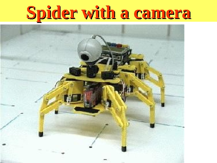 Spider with a camera