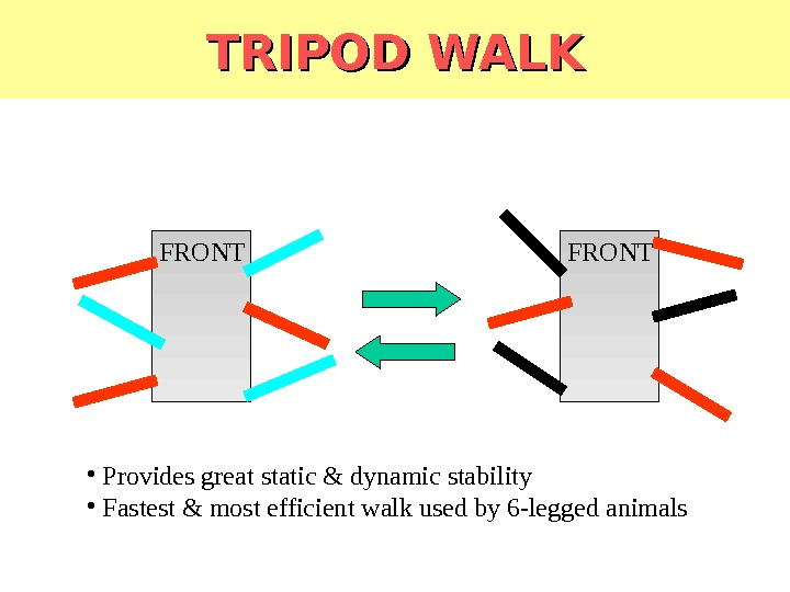 TRIPOD WALK FRONT •  Provides great static & dynamic stability •  Fastest & most