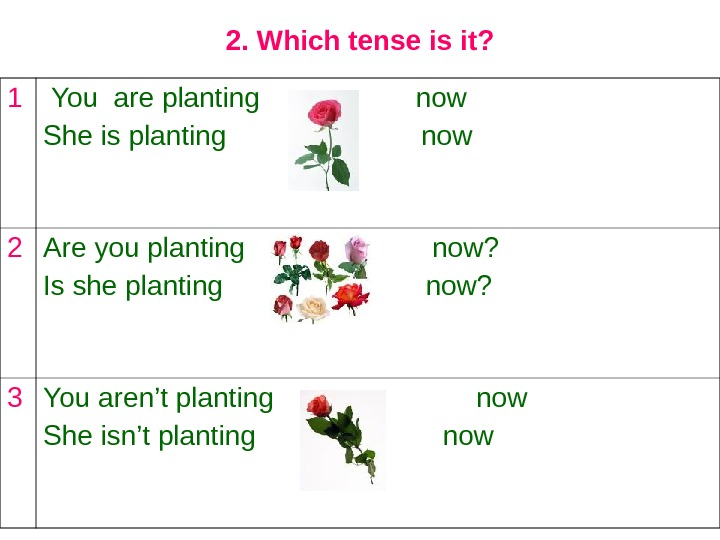 2. Which tense is it? 1  You are planting    now