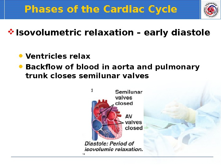 Phases of the Cardiac Cycle Isovolumetric relaxation – early diastole Ventricles relax Backflow of blood in