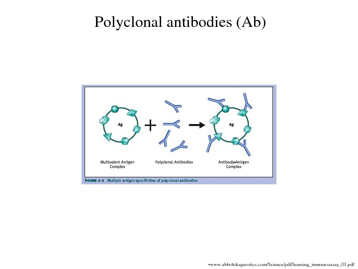 Polyclonalantibodies(Ab) • www. abbottdiagnostics. com/Science/pdf/learning_immunoassay_01. pdf