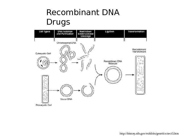 http: //history. nih. gov/exhibits/genetics/sect 3. htm. Recombinant DNA Drugs