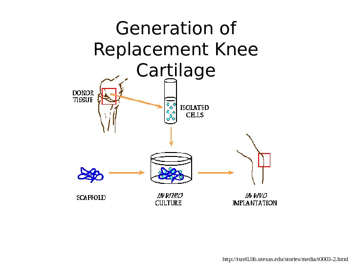 http: //txtell. lib. utexas. edu/stories/media/t 0003 -2. html. Generation of Replacement Knee Cartilage