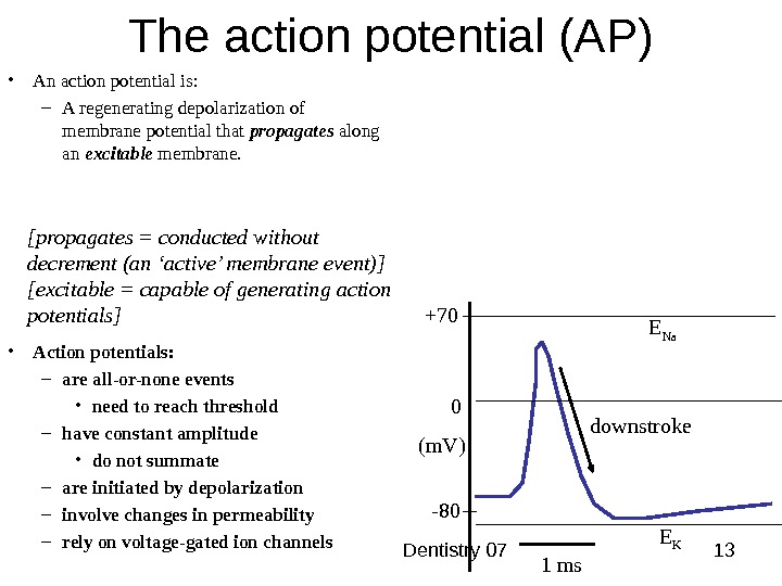 Dentistry 07 13 The action potential (AP) • An action potential is: – A regenerating