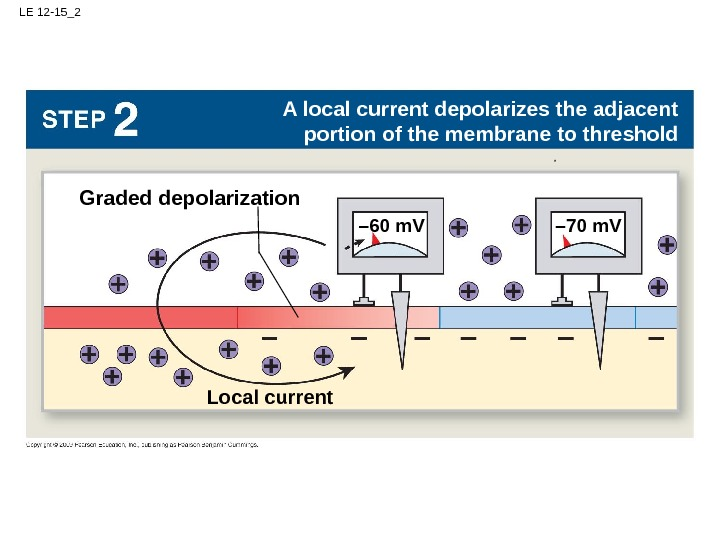 LE 12 -15_2 – 70 m. V Local current A local current depolarizes the adjacent portion