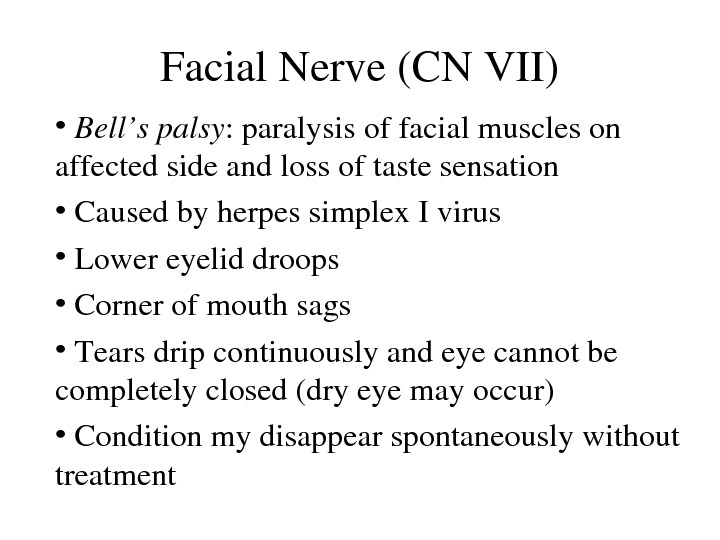 Facial. Nerve(CNVII) •  Bell'spalsy : paralysisoffacialmuscleson affectedsideandlossoftastesensation •  Causedbyherpessimplex. Ivirus •  Lowereyeliddroops