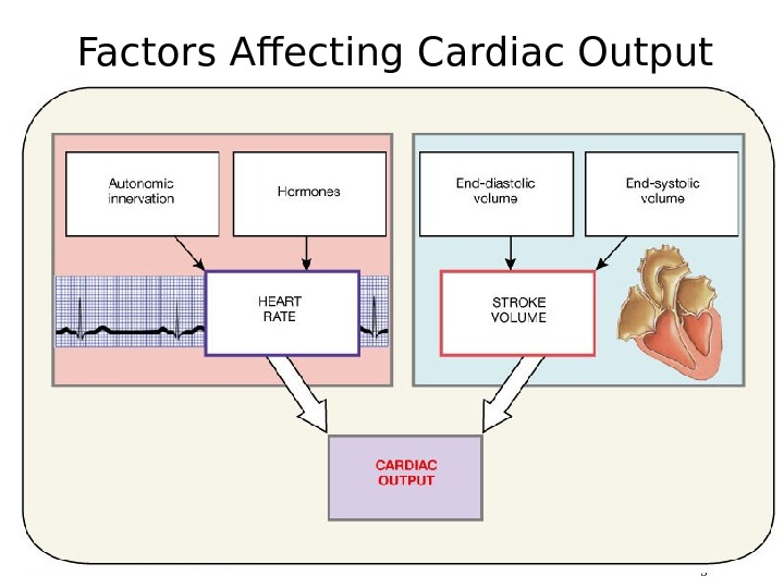 Factors Affecting Cardiac Output Figure 20. 20