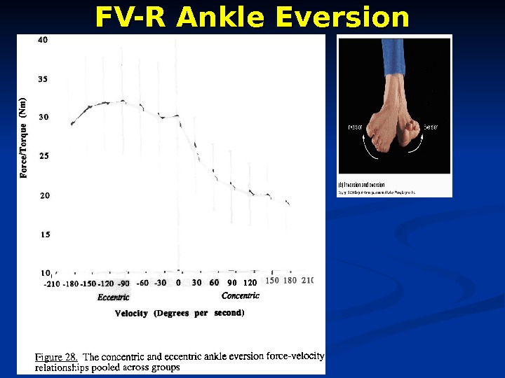 FV-R Ankle Eversion