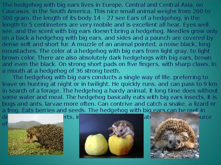 The hedgehog with big ears lives in Europe, Central and Central Asia, on Caucasus, in the