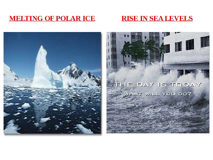 MELTING OF POLAR ICE RISE IN SEA LEVELS