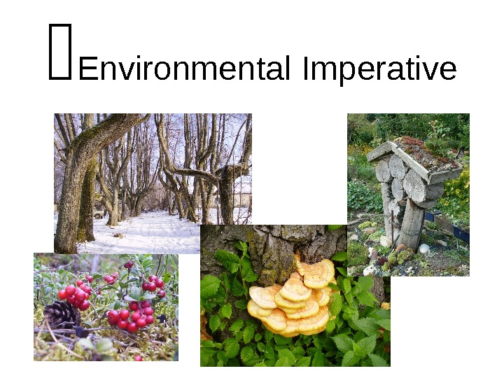 Environmental Imperative