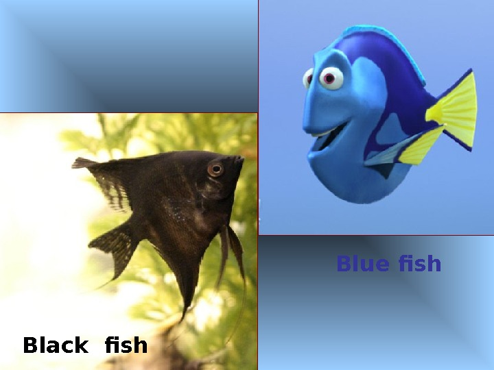 Blue fish Black fish