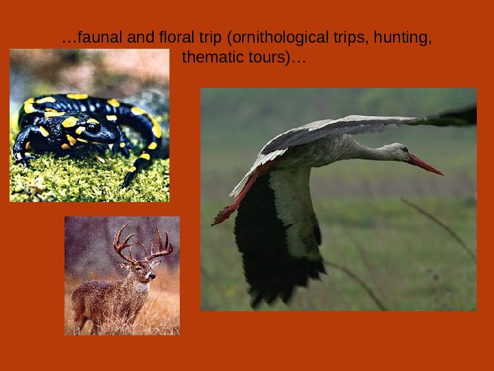 … faunal and floral trip (ornithological trips, hunting,  thematic tours)…