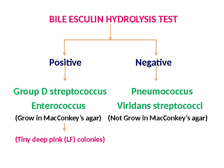BILE ESCULIN HYDROLYSIS TEST    Positive     Negative