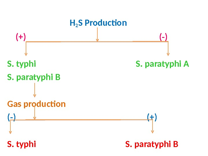 H 2 S Production (+)