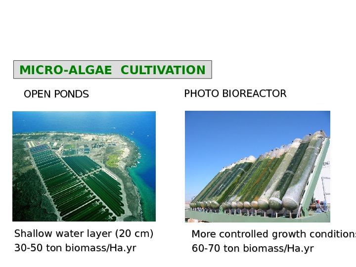MICRO-ALGAE CULTIVATION OPEN PONDS PHOTO BIOREACTOR Shallow water layer (20 cm) 30 -50 ton biomass/Ha. yr