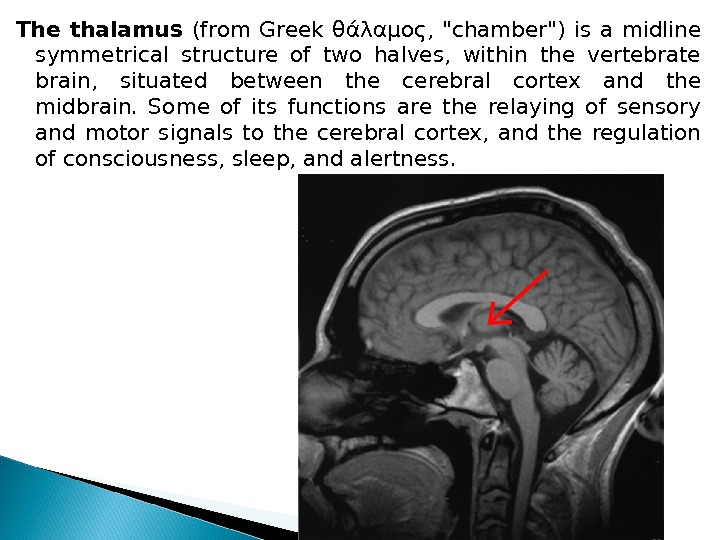 The thalamus (from Greek θάλαμος,  chamber) is a midline symmetrical structure of two halves,