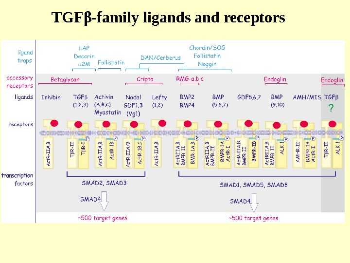 TGF β -family ligands and receptors