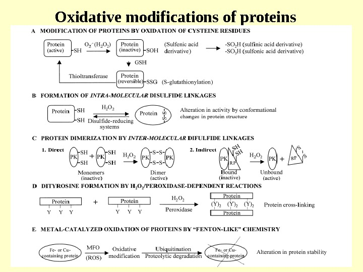 Oxidative modifications of proteins