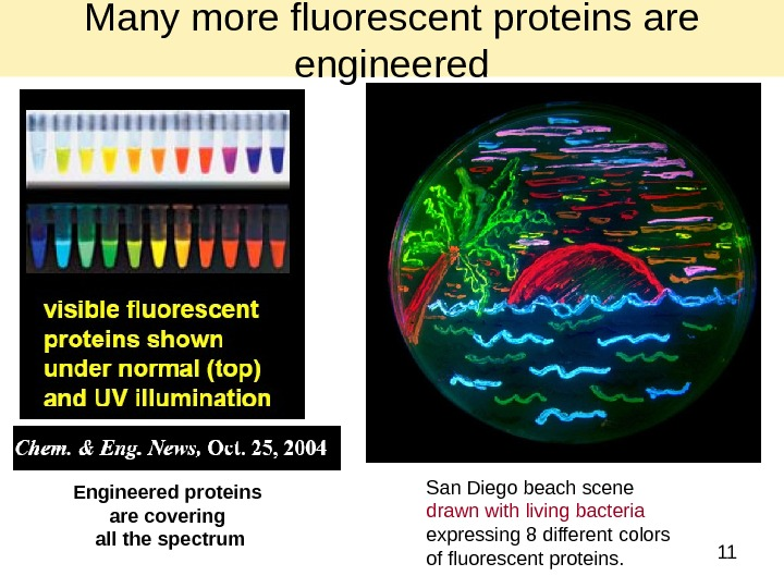 11 Engineered proteins are covering all the spectrum San Diego beach scene drawn with living bacteria