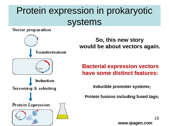 19 Protein expression in prokaryotic systems www. qiagen. com. So, this new story would be about