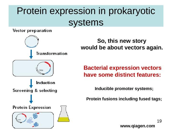 1 Gene Expression Systems in Prokaryotes and Eukaryotes