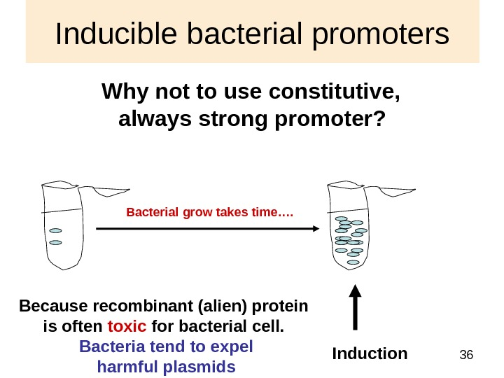 36 Inducible bacterial promoters Why not to use constitutive,  always strong promoter?  Induction Because