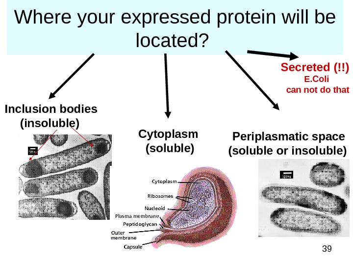 39 Where your expressed protein will be located?  Inclusion bodies (insoluble)  Cytoplasm (soluble) Periplasmatic