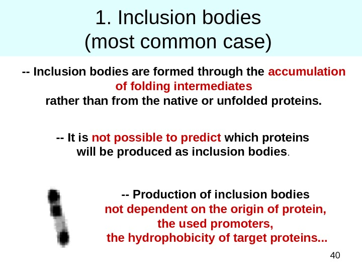 401. Inclusion bodies (most common case) -- Inclusion bodies are formed through the accumulation of folding