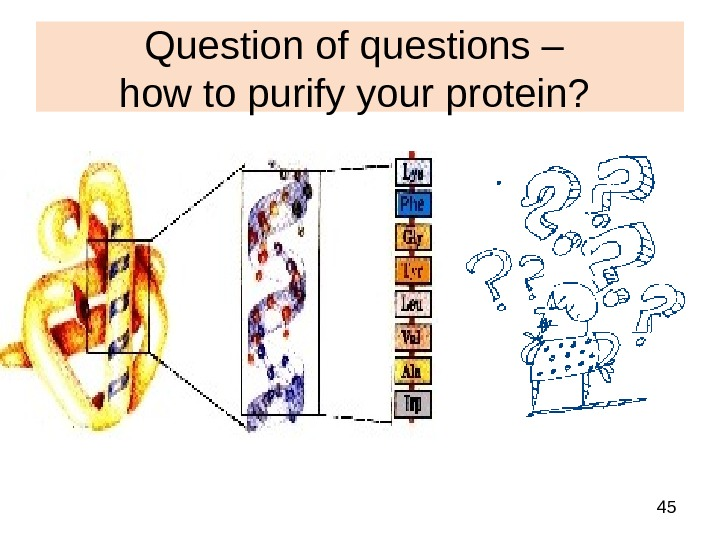 45 Question of questions – how to purify your protein?