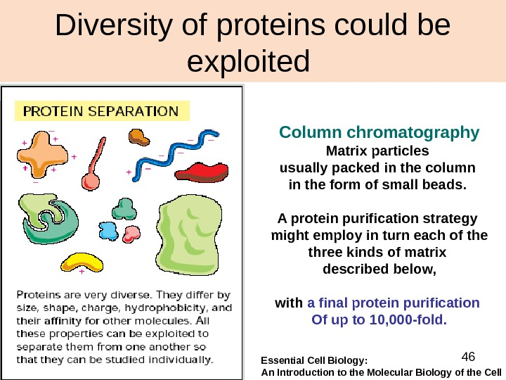 46 Diversity of proteins could be exploited Column  chromatography Matrix particles usually packed in the
