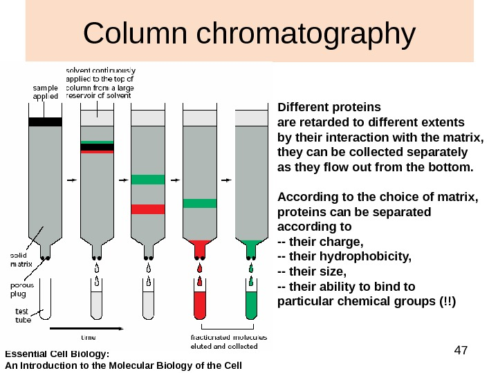 47 Column chromatography Different proteins are retarded to different extents by their interaction with the matrix,