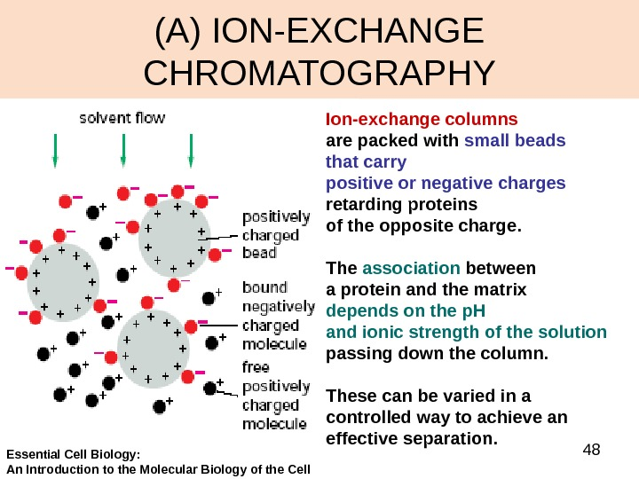 48(A) ION-EXCHANGE CHROMATOGRAPHY Ion-exchange columns  are packed with small beads that carry positive or negative