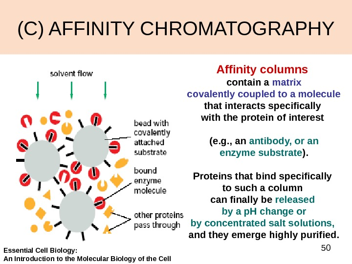 50(C) AFFINITY CHROMATOGRAPHY Affinity columns contain a matrix covalently coupled to a molecule  that interacts