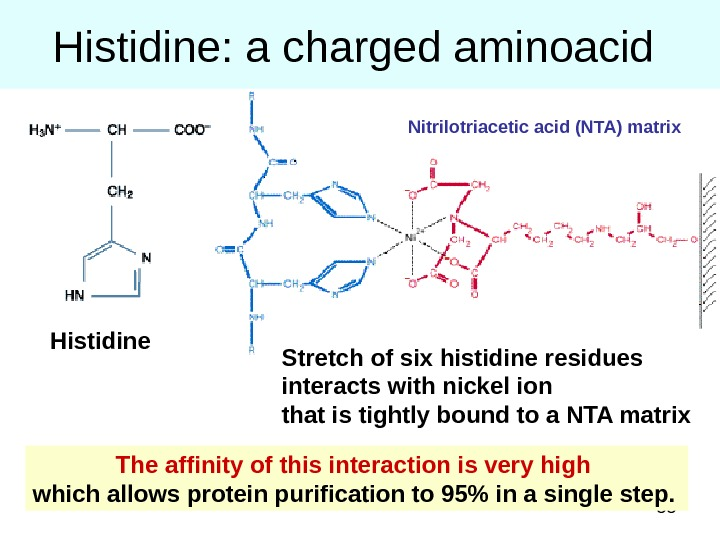 55 Histidine: a charged aminoacid The affinity of this interaction is very high which allows protein
