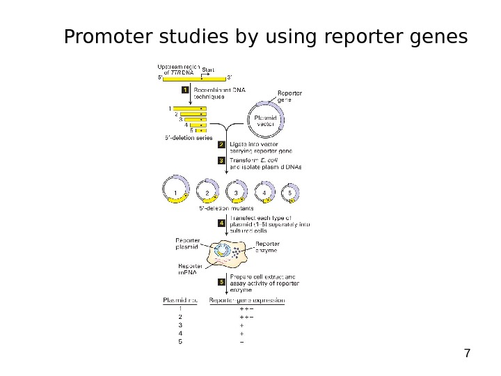 7 Promoter studies by using reporter genes