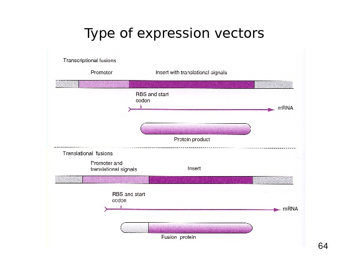 64 Type of expression vectors