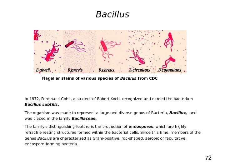 72 Bacillus In 1872, Ferdinand Cohn, a student of Robert Koch, recognized and named the bacterium