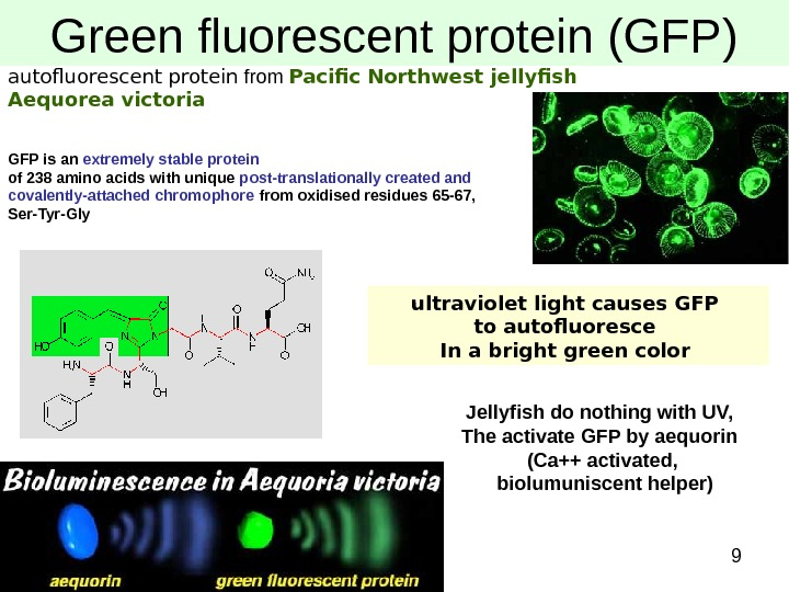 9 Green fluorescent protein (GFP) autofluorescent protein from Pacific Northwest jellyfish Aequorea victoria GFP is an