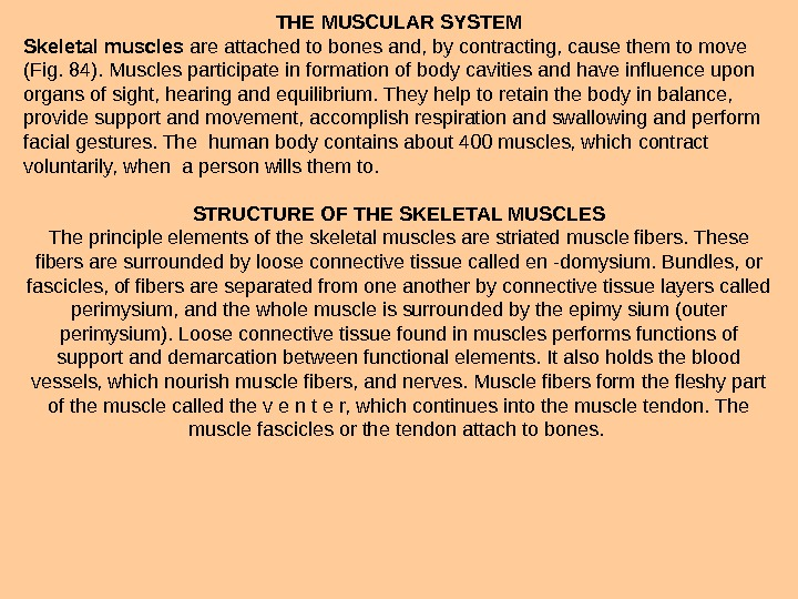 THE MUSCULAR SYSTEM Skeletal muscles are attached to bones and, by contracting, cause them to move