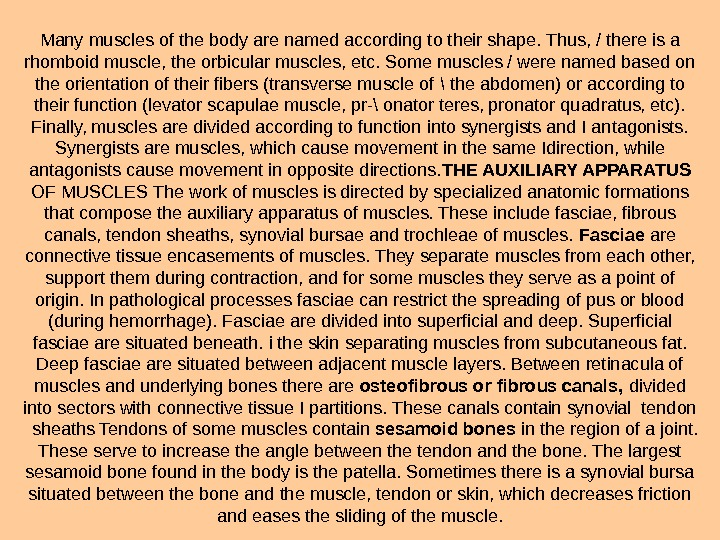 Many muscles of the body are named according to their shape. Thus, / there is a