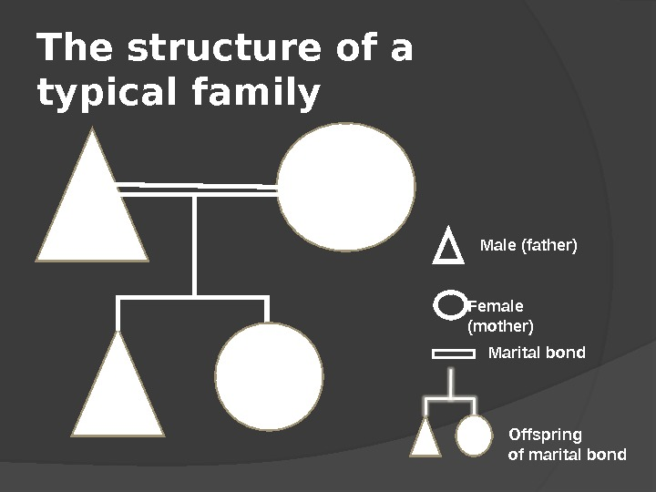 The structure of a typical family  Male (father) Female (mother) Marital bond Offspring of marital