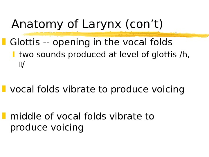 Anatomy of Larynx (con't) Glottis -- opening in the vocal folds two sounds produced