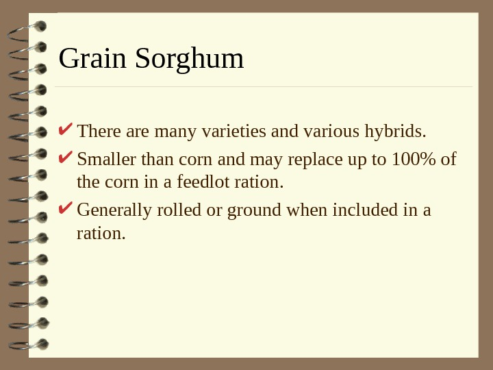 Grain Sorghum There are many varieties and various hybrids.  Smaller than corn and